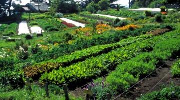 un-champs-de-permaculture