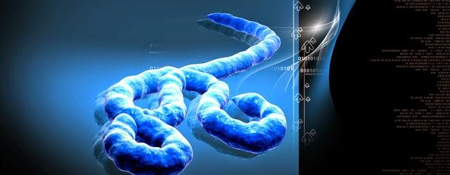 Ebola - Chlorure de Magnésium